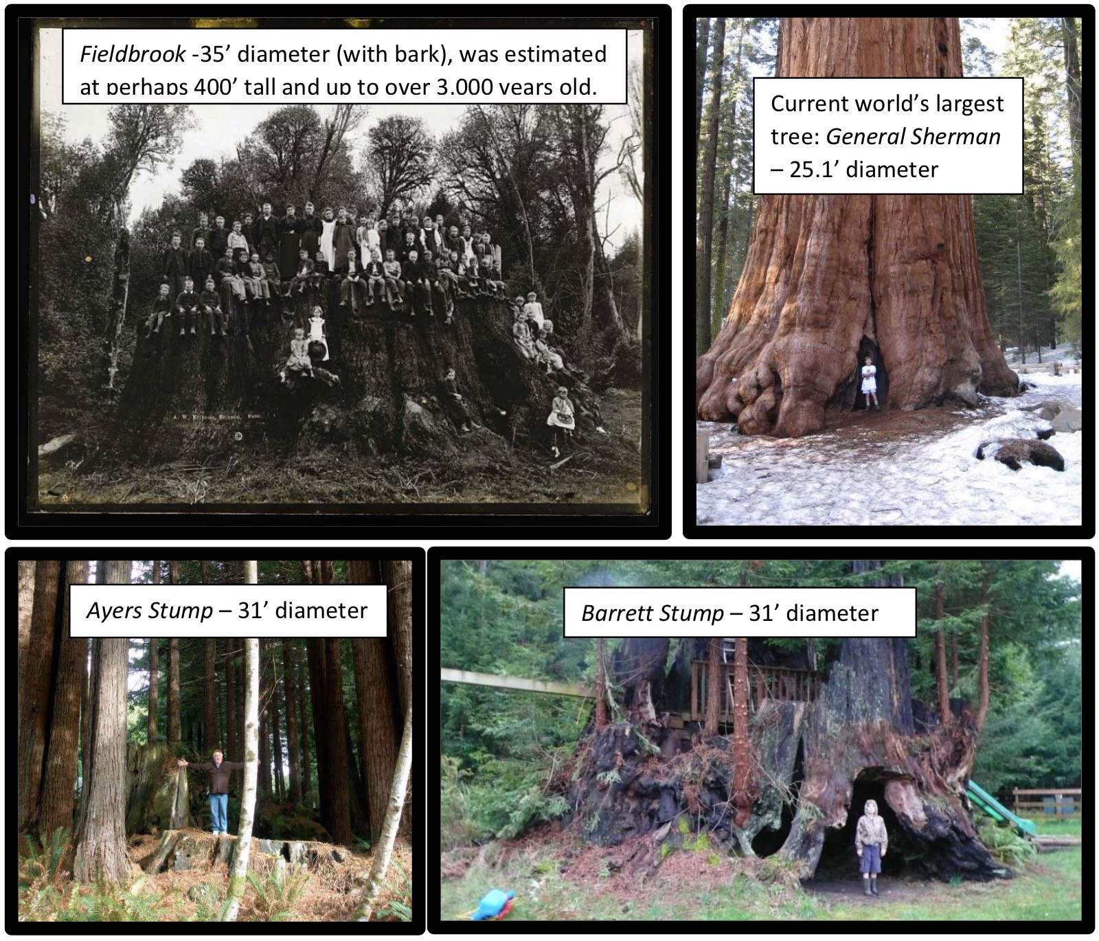 Source Trees