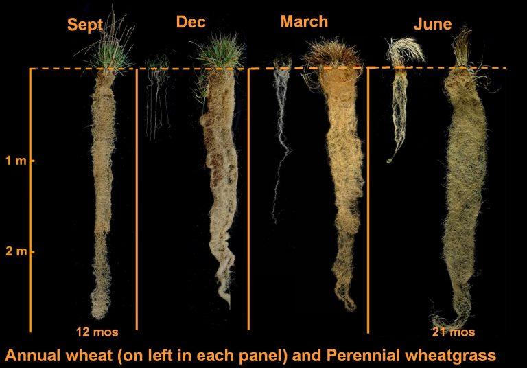 Annual vs Perennial