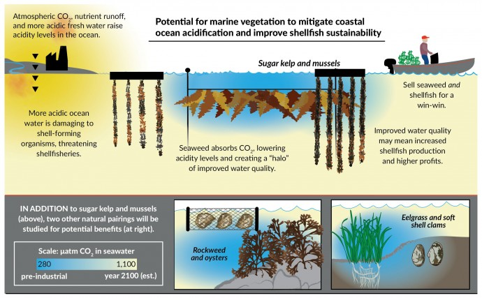 Kelp Diagram